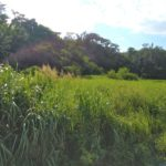 【売土地】恩納村恩納386.29坪/恩納村で農地をお探しの方 画像1