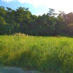 【売土地】恩納村恩納386.29坪/恩納村で農地をお探しの方 画像2